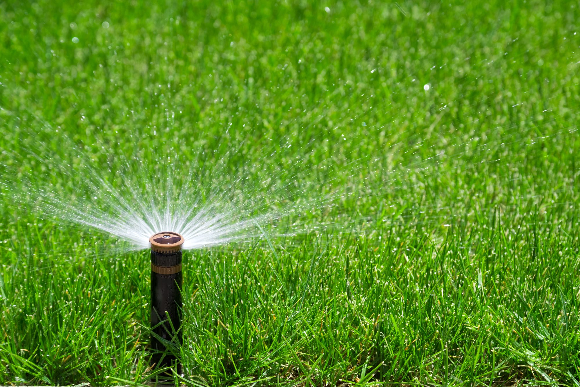 water sprinkler green grass