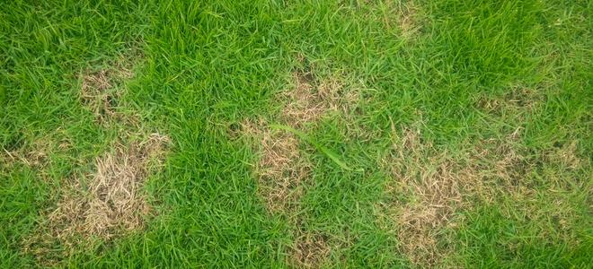 bald lawn spot